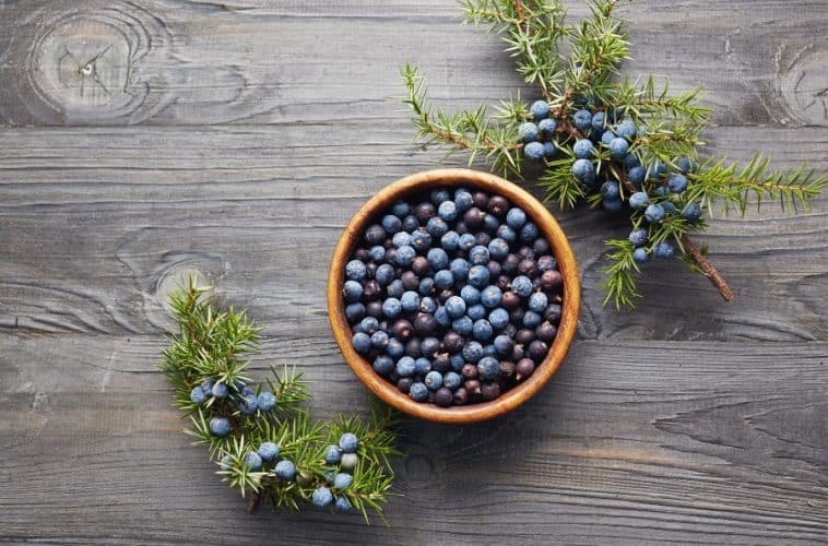 bowl of juniper berries with twigs
