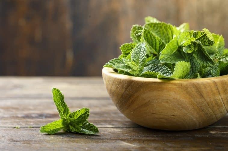 wooden bowl of fresh mint