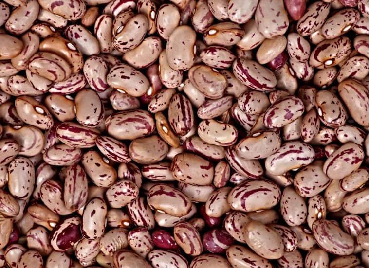borlotti beans cranberry beans