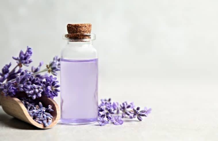 bottle of lavender extract and lavender flowers